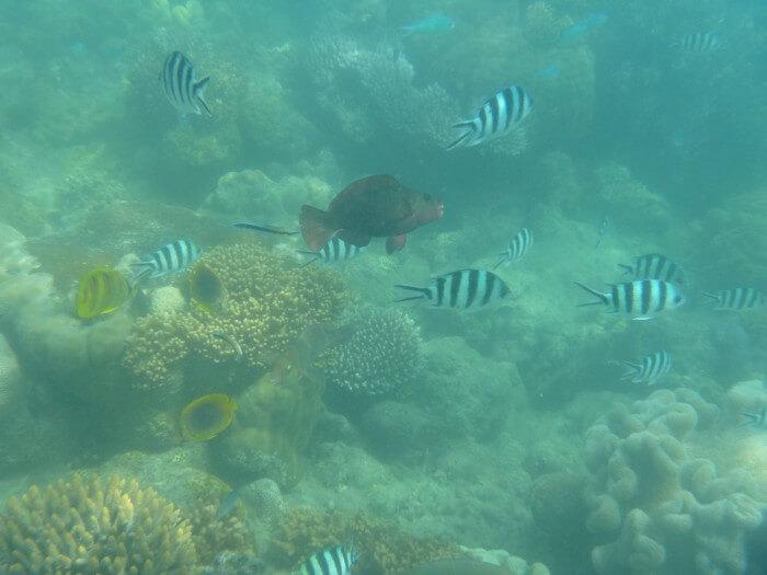 Nager avec les poissons