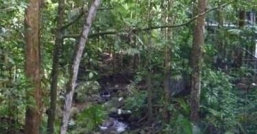 Daintree forest - Australie