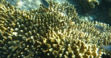 Grande barrière de corail Cairns - Australie