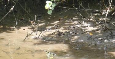 Rivière de crocodiles - Australie
