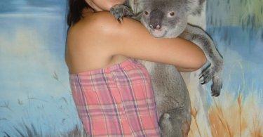 Un calin avec un koala